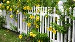Ngất ngây với những hàng rào tuy đơn giản nhưng vô cùng đẹp mắt