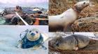 Giật mình với cách con người hủy hoại sinh vật biển