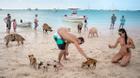 Hòn đảo lợn siêu đáng yêu khiến du khách phát cuồng