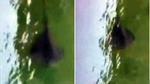 Sinh vật bí ẩn dưới nước gây hoang mang ở Italia