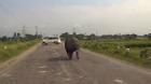 Ấn Độ: Tê giác