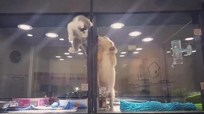 """Ngưỡng mộ tình bạn vượt qua """"ngàn mét"""" của chú mèo con dành cho bạn cún"""