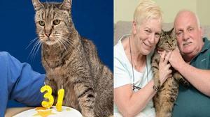 Con mèo già nhất thế giới trông như thế này đây