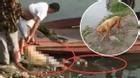 Hai cha con bị chết đuối dưới sông vì tắm cho chó