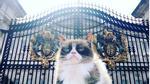 Phì cười với chú mèo khó tính nhất thế giới đi du lịch