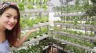 Choáng ngợp với vườn rau trên sân thượng nhà Vũ Thu Phương
