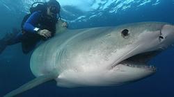 Cá mập Greenland có thể sống đến...400 tuổi