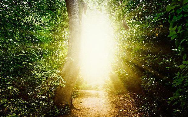 Một số người cho biết, họ đã nhìn thấy ánh sáng chói lóa, vệt sáng vàng hoặc ánh sáng mặt trời vào giây phút tim ngừng đập