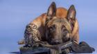 Tình bạn không biên giới giữa chó và cú mèo khiến hàng triệu con tim sửng sốt