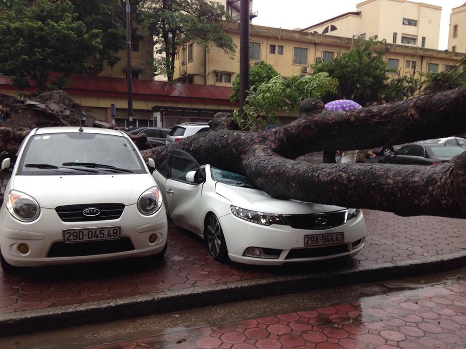 Một cây trên đường Hai Bà Trưng, Hà Nội bật gốc đè đúng 1 ô tô Forte.