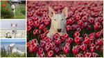"""Claire, cô chó điệu đà thích """"tự sướng"""" bên những bông hoa rực rỡ"""