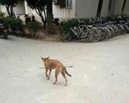 Xót xa chú chó lang thang bị bắn tên xuyên bụng