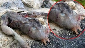 """Sinh vật bí ẩn nhầy nhụa như ốc sên khiến các nhà khoa học phải """"vò đầu bứt tai"""""""