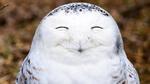 Những khoảnh khắc hài hước trong thế giới động vật