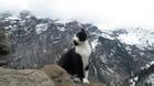 Gặp chú mèo thông minh dẫn đường cho du khách leo núi bị lạc ở Thụy Sỹ