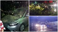 Sài Gòn lại đang mưa rất to, hàng loạt cây xanh và trụ điện ngã đổ tại Trung tâm quận 1
