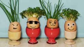 Đọc xong bài viết này bạn nhất định sẽ không vứt vỏ trứng đi nữa