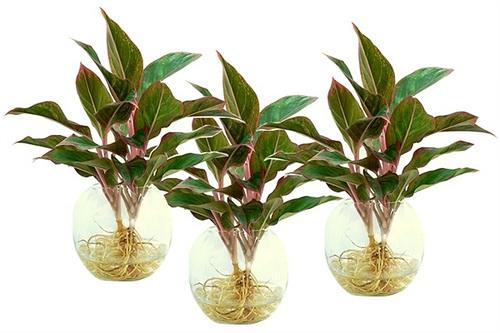 Đặt 3 loại cây này lên bàn thờ, tài lộc, may mắn ùn ùn kéo đến với gia chủ