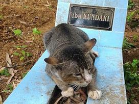 Mèo cả năm nằm trông mộ chủ suốt ngày đêm ở Indonesia