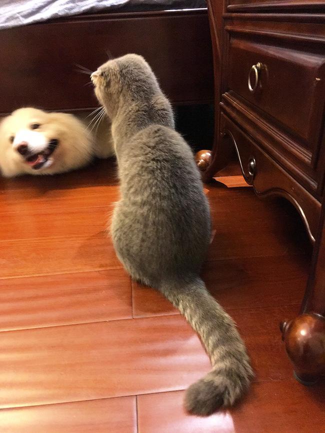 Nhà có một em cún nghịch, một bé mèo chảnh - cứ chí choé với nhau cũng phải! - Ảnh 8.