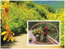 """Hình ảnh nam phượt thủ khoe """"chiến tích"""" vặt sạch hoa dã quỳ bên đường gây xôn xao"""