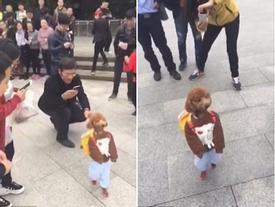 """""""Cậu học trò"""" chó nhỏ đeo cặp đi như người suốt 2 km không nghỉ khiến cả con phố náo loạn"""