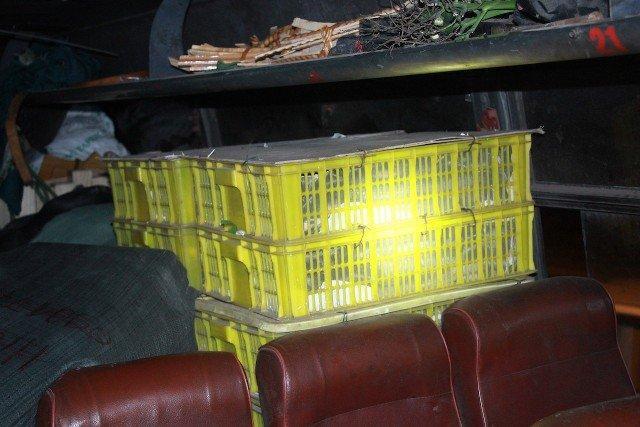 Xe khách cho 120 con rắn hổ mang nằm chung hành khách - Ảnh 1.