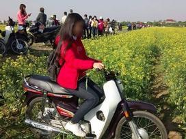 Hình ảnh cô gái xinh đẹp phi xe máy qua vườn hoa cải gây bức xúc