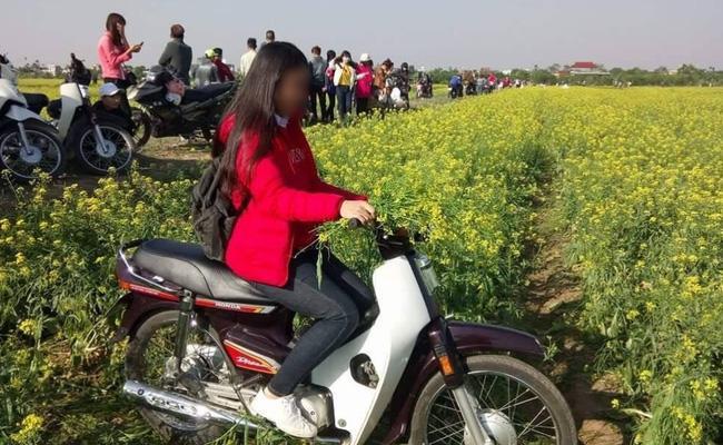 Hình ảnh cô gái xinh đẹp phi xe máy qua vườn hoa cải gây bức xúc - Ảnh 3.
