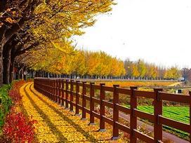 Ngẩn ngơ với sắc đỏ, vàng của mùa thu Hàn Quốc - Nhật Bản
