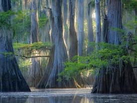Những lùm cây hình thù kỳ lạ như đến từ thế giới khác