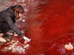 Ô nhiễm nặng tại Trung Quốc khiến nước chuyển màu đỏ, cá chết hàng loạt