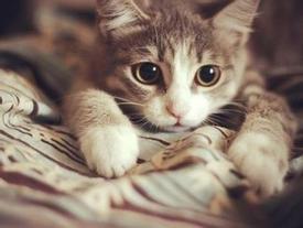 Không thỏa thuận được giá bán, chủ nhân nhẫn tâm đập chết mèo cưng trước mặt khách