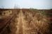 """Càng gần dịp Tết âm lịch, không khí tại các vườn trồng đào ở Nhật Tân (Tây Hồ, Hà Nội) lại càng hối hả hơn. Bên cạnh những cây đào thế truyền thống thì có những gốc đào """"cổ"""" có tuổi đời ít nhất 20 năm cũng đang thu hút được sự quan tâm của nhiều người."""