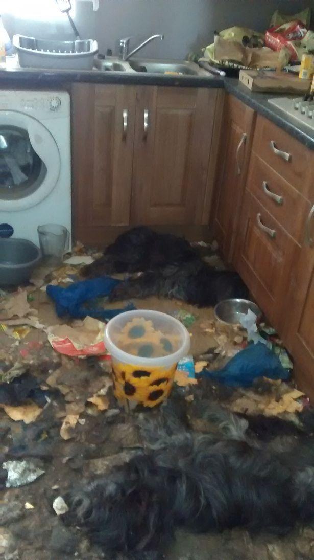 Video: Khung cảnh kinh hoàng bên trong căn nhà nơi 2 chú chó bị bỏ đói tới chết - Ảnh 2.