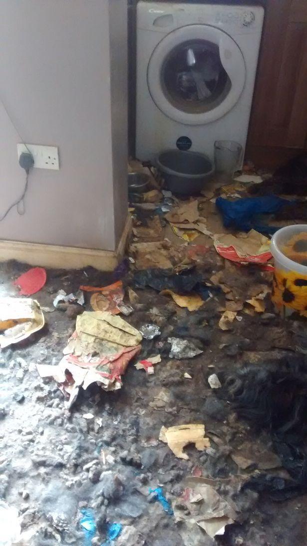 Video: Khung cảnh kinh hoàng bên trong căn nhà nơi 2 chú chó bị bỏ đói tới chết - Ảnh 7.