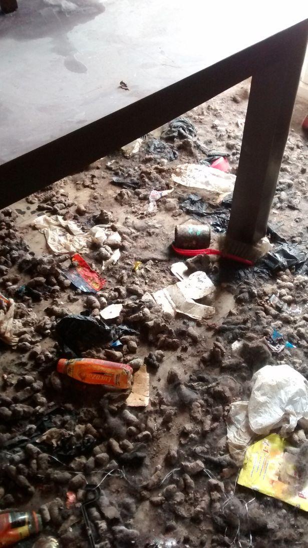 Video: Khung cảnh kinh hoàng bên trong căn nhà nơi 2 chú chó bị bỏ đói tới chết - Ảnh 6.