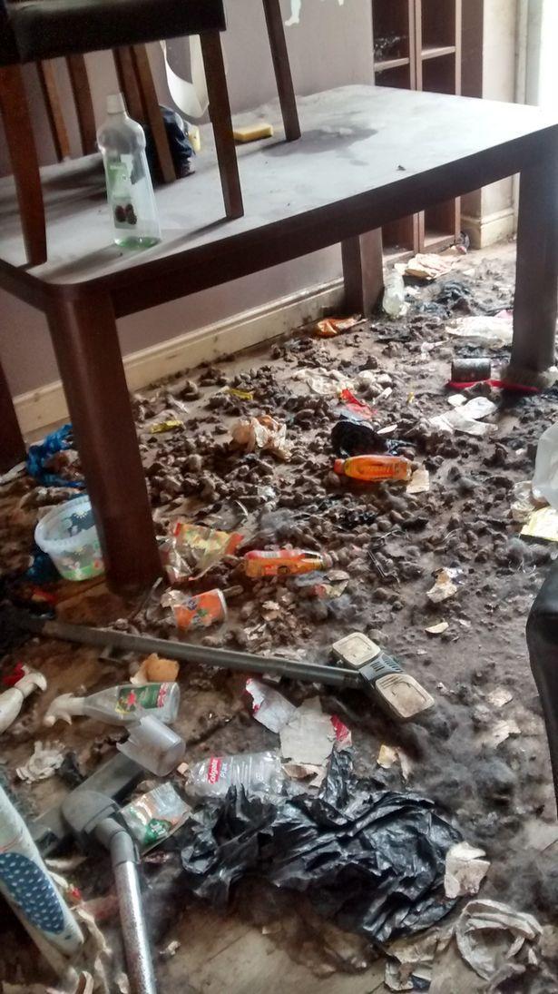 Video: Khung cảnh kinh hoàng bên trong căn nhà nơi 2 chú chó bị bỏ đói tới chết - Ảnh 3.