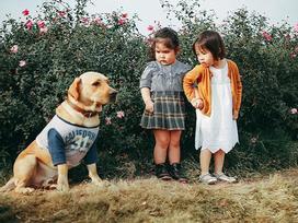 Khuôn mặt sợ chó siêu đáng yêu của cô bé má phính Hà Nội