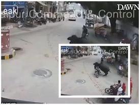 Video: Người đàn ông xấu số đi xe máy, bị trâu húc văng xuống đất bất tỉnh