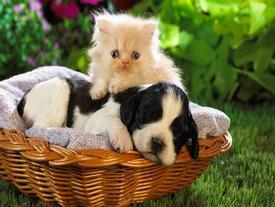 Muốn nuôi thú cưng trong nhà phải biết 7 quy tắc phong thủy để rước tài lộc, đón may mắn