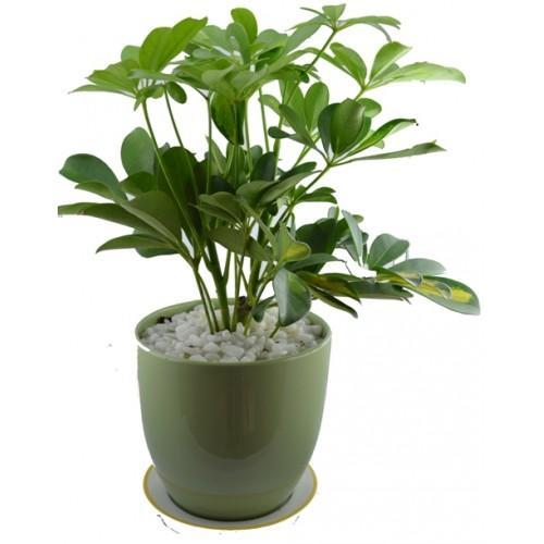 Tuổi nào phải trồng đúng cây nấy thì tài vận vào nhà ôm không xuể tay - Ảnh 2.