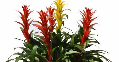 Tuổi nào phải trồng đúng cây nấy thì tài vận vào nhà ôm không xuể tay - Ảnh 1.