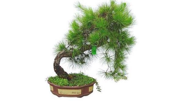 Tuổi nào phải trồng đúng cây nấy thì tài vận vào nhà ôm không xuể tay - Ảnh 3.