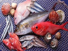Những loại cá có chết đói cũng không ăn