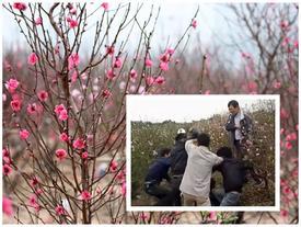 Trộm xe tay ga ở vườn đào Tết, bị người dân vây đánh hội đồng