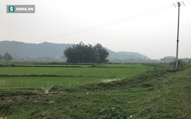 Đôi vợ chồng sống 50 năm trong lùm tre ở Nghệ An: Nuôi được mấy con gà mà không dám ăn - Ảnh 1.