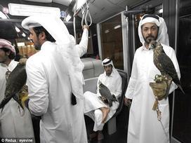 Không chỉ được đi máy bay, chim ưng của các đại gia Ả Rập còn được hưởng dịch vụ sang chảnh này