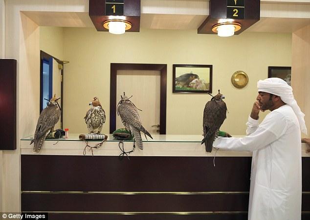 Không chỉ được đi máy bay, chim ưng của các đại gia Ả Rập còn được hưởng dịch vụ sang chảnh này - Ảnh 2.