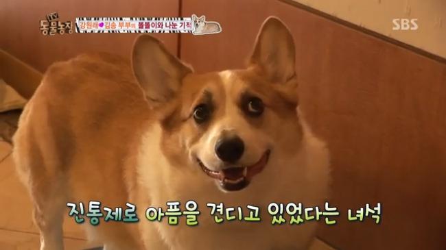 2 tháng sau ngày chú chó cưng qua đời, phép màu đã đến với cặp vợ chồng nghệ sĩ Hàn - Ảnh 5.